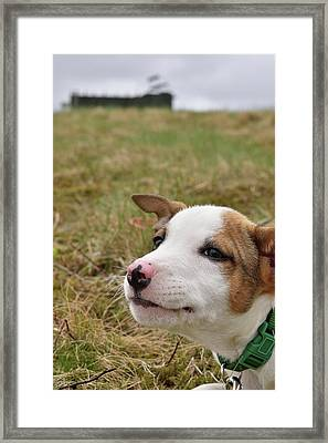 Mischief On The Farm Framed Print by Justin Mountain