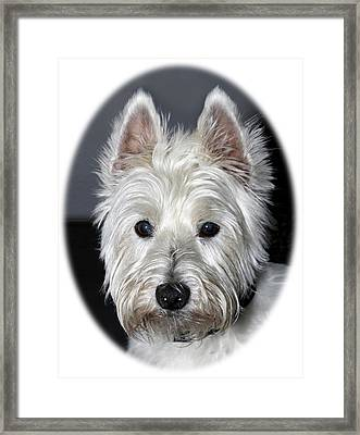 Mischievous Westie Dog Framed Print