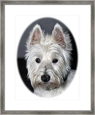 Mischievous Westie Dog Framed Print by Bob Slitzan