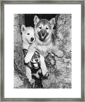 Mischievous Pups Framed Print by M E Browning