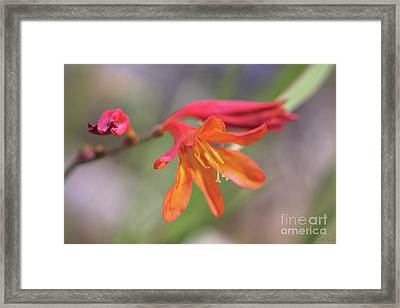 Framed Print featuring the photograph Misplaced Beauty by Linda Lees