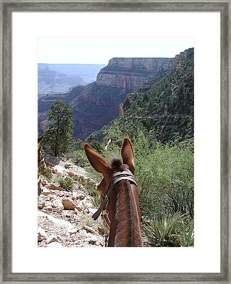 Framed Print featuring the photograph Miss Ann  by Nancy Taylor
