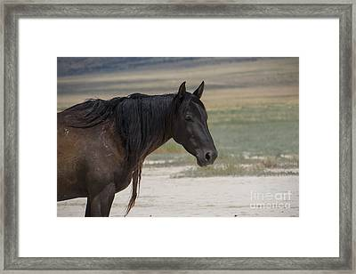 Miss Coffee Framed Print by Nicole Markmann Nelson