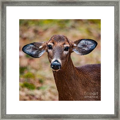 Miss Deer 1 Framed Print