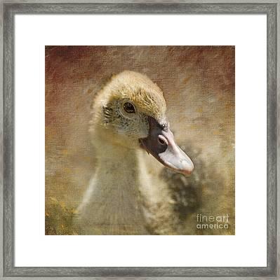 Miss Duck Framed Print