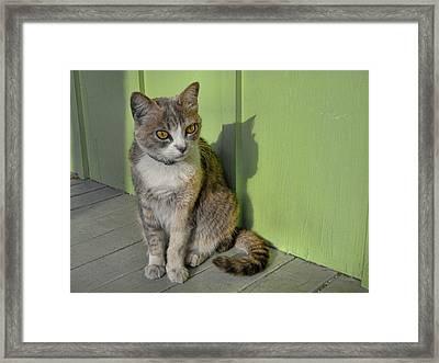 Miss Esmeralda Framed Print by JAMART Photography