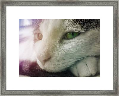 Miss Ginny Framed Print by JAMART Photography