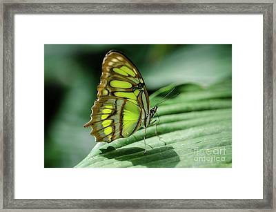 Miss Green Framed Print