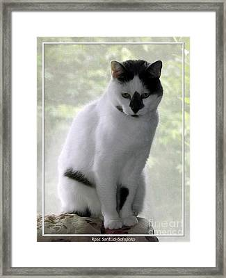 Framed Print featuring the photograph Miss Jerrie Cat With Watercolor Effect by Rose Santuci-Sofranko