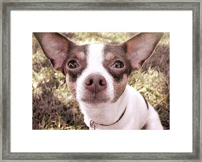 Miss Lily Framed Print