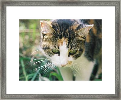 Miss Ritty Framed Print