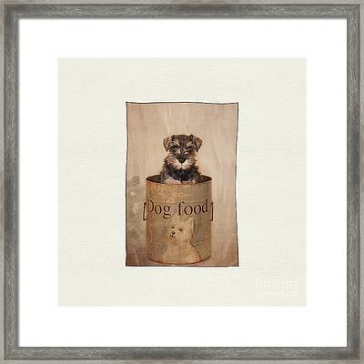 Miss Ruby ... 74 Days Old. Framed Print by ShabbyChic fine art Photography