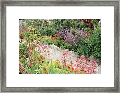 Mission Garden Framed Print by Carol Groenen