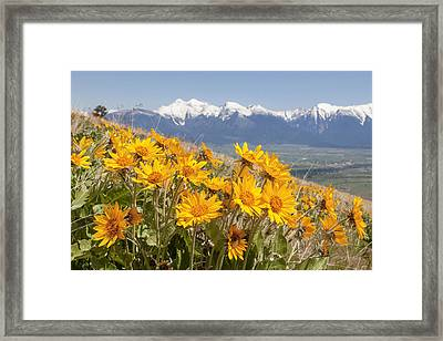 Mission Mountain Balsam Blooms Framed Print by Jack Bell