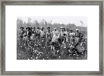 Mississippi Cotton Farmer And Cotton Pickers  1908 Framed Print by Daniel Hagerman