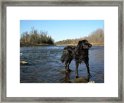 Framed Print featuring the photograph Mississippi River Dog On The Rocks by Kent Lorentzen