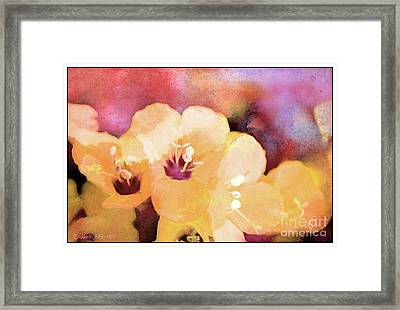 Missouri Wildflowers 5  - Polemonium Reptans -  Digital Paint 6 Framed Print by Debbie Portwood