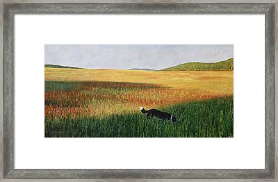 Missy In The Field Framed Print by Allan OMarra