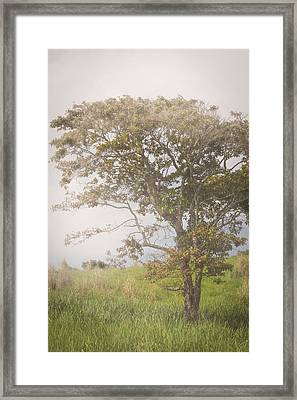 Misty Landscape Framed Print
