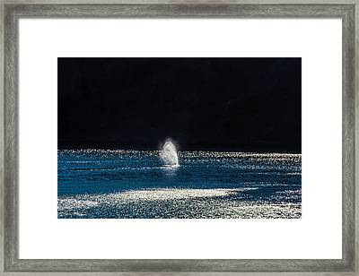 Mist From A Gary Whale Framed Print by Garry Gay