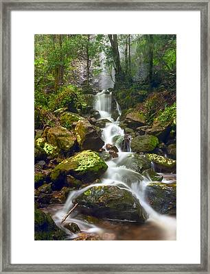 Mist In The Jungle Framed Print