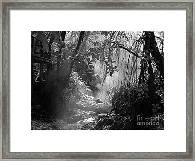 Mist In The Jungle Framed Print by Susan Lafleur