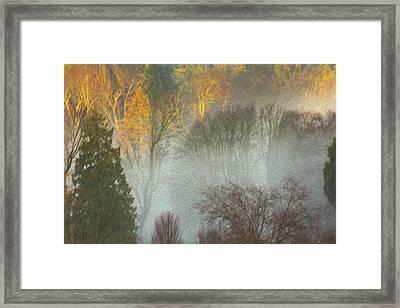 Mist In The Park Framed Print