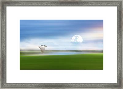 Mist On The Bayou Framed Print by Georgiana Romanovna