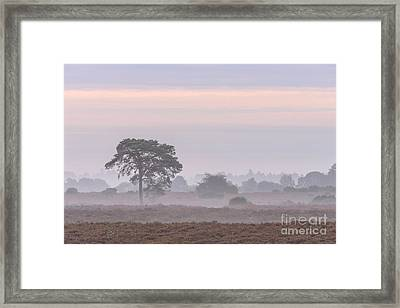 Mist Stripes New Forest Framed Print by Richard Thomas