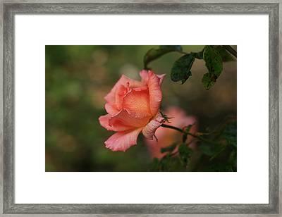 Misted Pink Framed Print