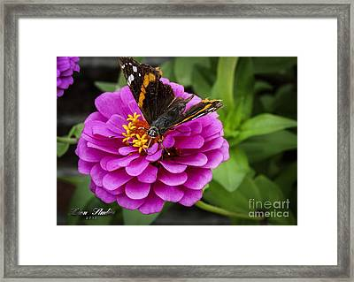 Mister Butterfly On A Pink Flower Framed Print by Melissa Messick
