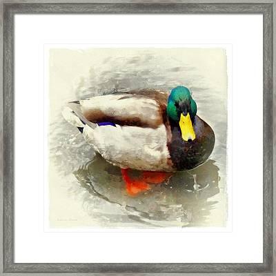 Mister Duck Framed Print by Patricia Strand