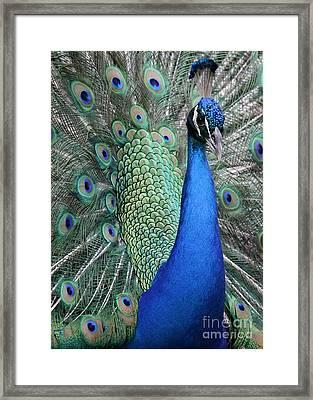 Mister Peacock Framed Print