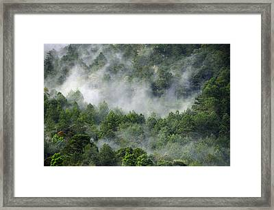 Mistico De San Jose De Pacifico Framed Print by Skip Hunt