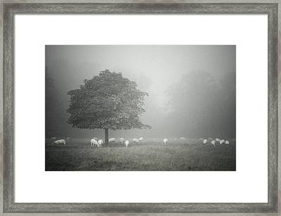 Misty And Muted Framed Print by Chris Fletcher