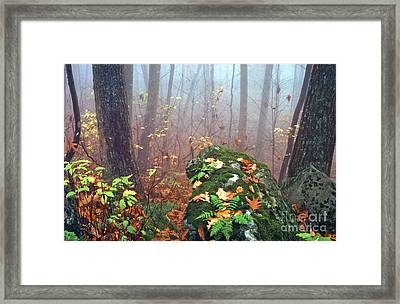 Misty Autumn Woodland Framed Print by Thomas R Fletcher