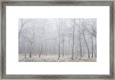 Misty Birch Wood Framed Print