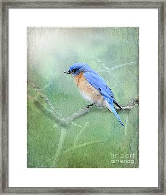 Framed Print featuring the photograph Misty Blue by Betty LaRue