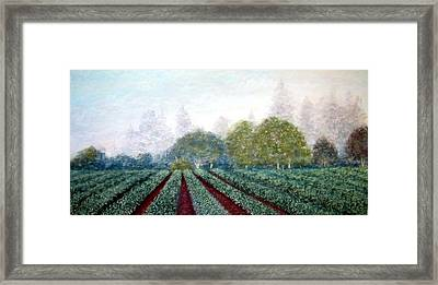 Misty Blue Framed Print by Carl Capps