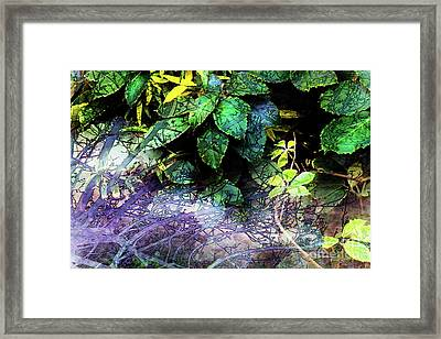 Misty Branches Framed Print