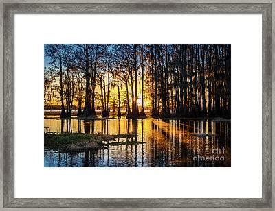 Misty Caddo Dawn Framed Print