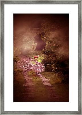 Misty Deer Framed Print