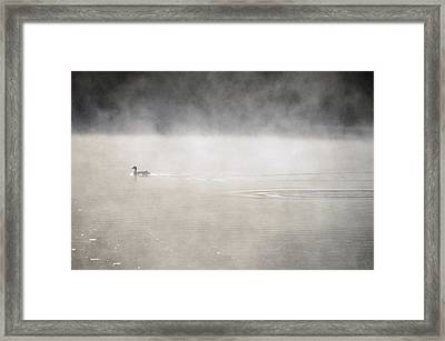 Misty Duck Framed Print