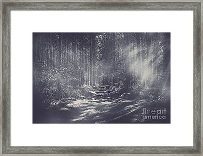 Misty Enchanted Pine Forest Framed Print by Jorgo Photography - Wall Art Gallery