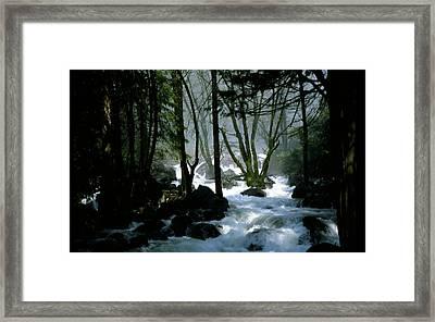 Misty Forest Framed Print by Joe Darin