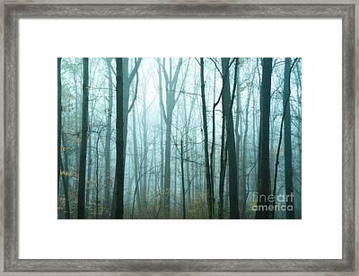 Misty Forest Framed Print by John Greim