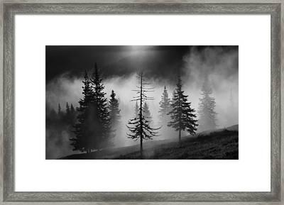 Misty Forest Framed Print by Julien Oncete