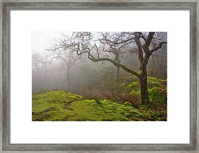 Misty Forest Framed Print by Keith Boone