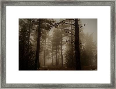 Misty Forest Morning Framed Print
