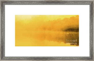 Misty Gold Framed Print